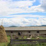На закарпатській фермі вирощують продукти, як колись