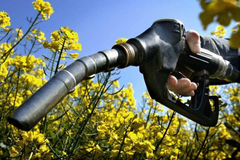 Бензин із кукурудзи, дизель – із сої. Виробництво біопалива у світі та Україні